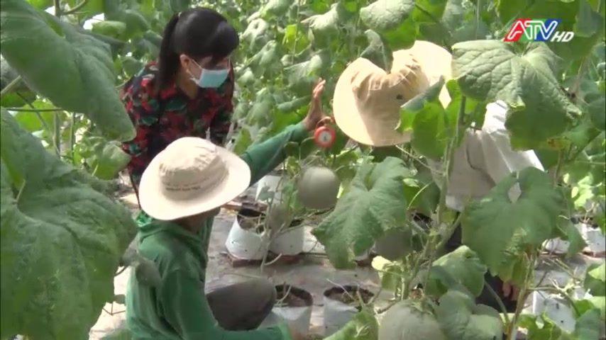 An Phú: Ứng dụng công nghệ cao trong sản xuất nông nghiệp - Nguồn :
